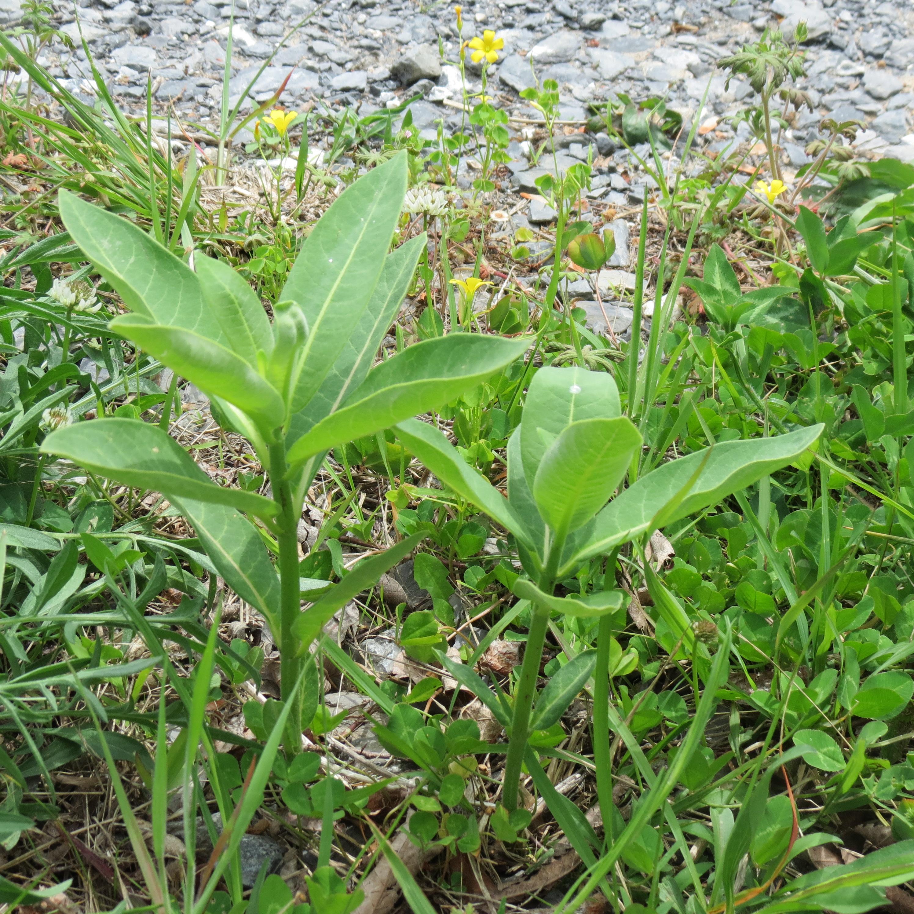 The Life Cycle Of Marijuana Plants  I Love Growing Marijuana