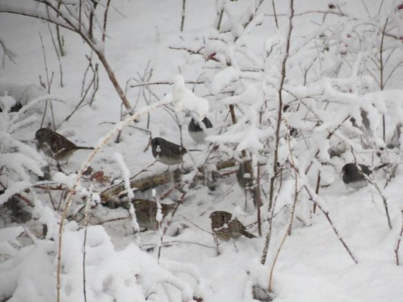 Dozens of birds