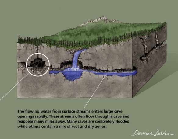 How water flows through karst bedrock. Illustration by Denise Dahn (www.dahndesign.com/denises-blog/).