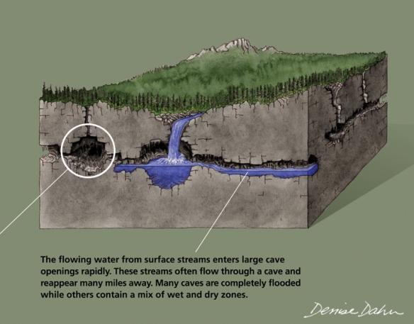 How water flows through karst bedrock. Illustration by Denise Dahn (www.dahndesign.com/denises-blog/).